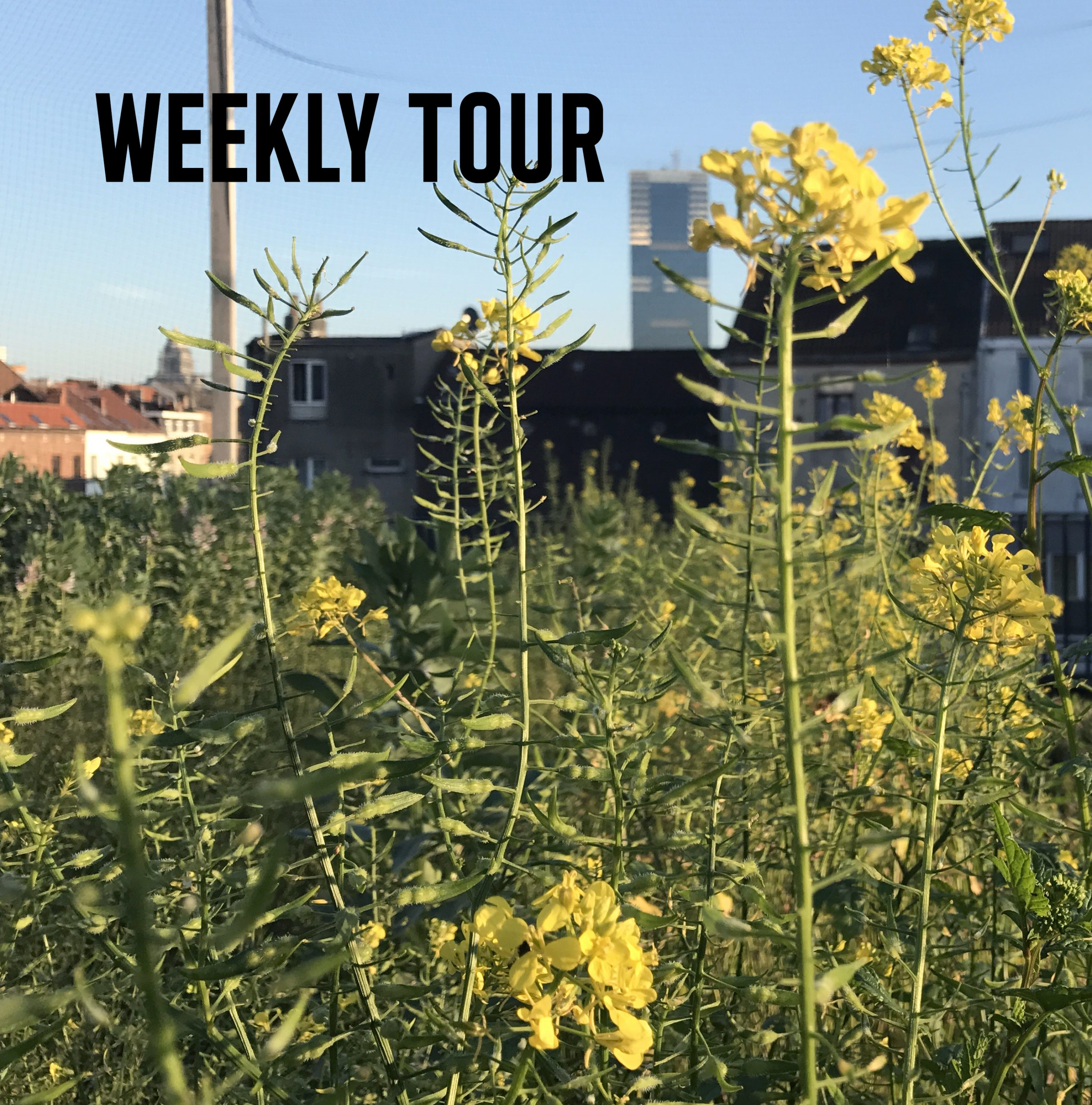 Weekly tour (1h)